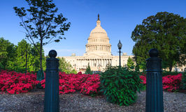 US Capitol Building with Azaleas Stock Image