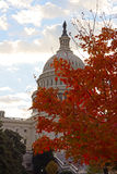 US Capitol building at dawn in autumn colors. Royalty Free Stock Images