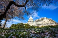 US Capitol Building - Washington DC United States Stock Image