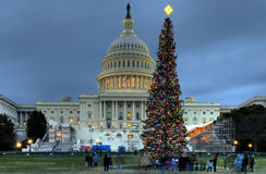 US Capitol Christmas Tree. An American tradition since 1964, the Capitol Christmas tree in Washington DC in front of the US Capitol Stock Photos