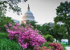 US Capitol Dome Washington DC Royalty Free Stock Images