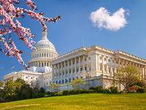 US Capitol at spring sunny day. US Capitol at sunny day, cherry blossom Royalty Free Stock Photography