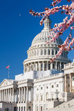 US Capitol at spring sunny day Stock Images