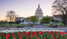 US Capitol  Spring Washington DC. Landscape photo of US Capitol in spring in the quiet of daybreak before crowds of tourists begin to sightsee.  As the Royalty Free Stock Image