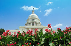 US Capitol with Summer Flowers. A beautiful day on Capitol Hill.  The Congress building with an American flag flying, framed by lush pink flowers. Could Stock Images