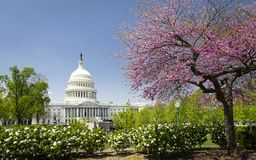 The US Capitol in Washington DC at spring stock photo