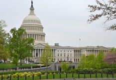 The US Capitol in Washington DC in the spring Royalty Free Stock Photography
