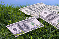 US Currency in grass Stock Photography