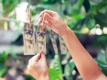 US dollar banknotes hanging on rope money laundering conept royalty free stock photography