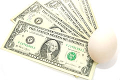 US dollar bills with white egg, new birth Royalty Free Stock Photo
