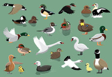 US Ducks Cartoon Vector Illustration Stock Photo