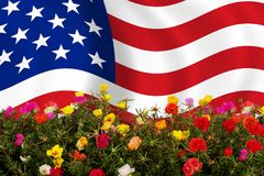 US flag. American flag between colored flowers royalty free stock photography