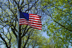 US Flag. A US flag flying proudly on the Fourth of July Stock Photography