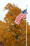 Us flag in front of a tree Royalty Free Stock Photos
