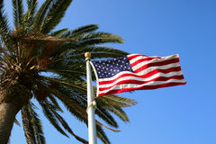 US Flag with Palm Tree Royalty Free Stock Photography