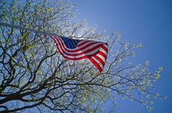 US Flag. A upward view of a US Flag waving in the sun under the shade of a tree Stock Images