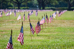 Us Flags In A Veterans Cemetery On Veterans Day Royalty Free Stock Photos