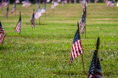 Us flags in a veterans cemetery on Veterans day Royalty Free Stock Photo
