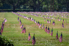 Us flags in a veterans cemetery on Veterans day Royalty Free Stock Image