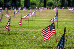 Us flags in a veterans cemetery on Veterans day Royalty Free Stock Images