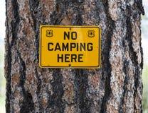 US Forest Service No Camping Sign auf einer Kiefer Lizenzfreie Stockbilder