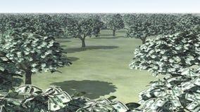 US Hundred Dollar Bill Trees. Grove of US Hundred Dollar Bill Trees Stock Photos