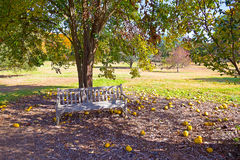 US National Arboretum in the Fall, Washington DC. A lonely bench adds to the charm and beauty of the colorful forest and fallen Chinese quince fruits Royalty Free Stock Images