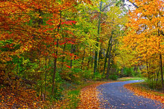 US National Arboretum in the Fall, Washington DC. Road framed by colorful autumn leaves in the dense thicket Stock Photos