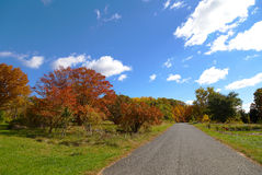 US National Arboretum in the Fall, Washington DC. Road framed by colorful autumn trees Royalty Free Stock Photography
