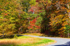 US National Arboretum in the Fall, Washington DC. Road framed by colorful autumn trees in the dense thicket Stock Images