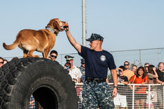 Us navy sailor and dog training. Us navy seaman and dog training of kilo 9 unit during the National Night Out 2013 in Sigonella Stock Photography