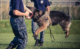 Us navy seaman and police dog of k9 unit. Us navy seaman and dog training of k9 unit during the National Night Out 2013 in Sigonella Royalty Free Stock Photos