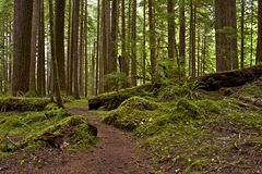 US Northwest Rainforest Stock Images