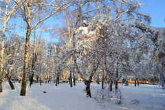Winter is snowy in Ukraine. At us only such winter, snow. You can go sledging and skiing. Snow covered all the fir trees, and above the blue sky. Beauty royalty free stock photography