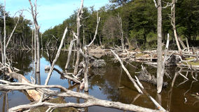 Damage To The Environment And Forests. Argentina - Ushuaia - Tierra del Fuego - Damage To The Environment And Forests stock footage