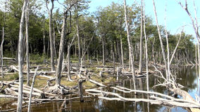 Damage To The Environment And Forests. Argentina - Ushuaia - Tierra del Fuego - Damage To The Environment And Forests stock video