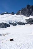USA - Alaska -  Juneau Ice Field Stock Photography