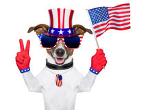 Usa american dog Royalty Free Stock Photos