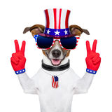 Usa american dog Stock Photography