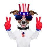 Usa american dog Stock Photography