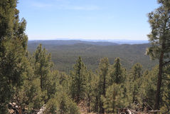 USA, Arizona - Endless Pine Forests in Central AZ. Arizona is often associated with desert landscapes. Surprisingly enough east-central Arizona - with its high Stock Photos