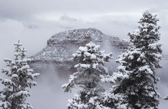 USA Arizona Grand Canyon norr kant i snö Arkivbilder