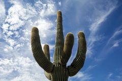 USA - Arizona - Organ Pipe Cactus National Monument Royalty Free Stock Images