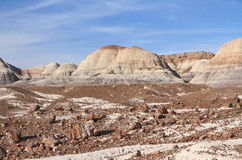 USA,AZ: Petrified Forest NP - Petrified Trees Royalty Free Stock Image