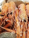 King prawns on sale in a local market stock photo