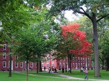USA Cambridge, Massachusetts - September 29, 2008 Den härliga universitetsområdet av den äldsta Harvarduniversitetet i tidig höst arkivfoto