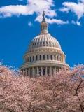 USA Capitol budynek podczas wiosny obraz royalty free
