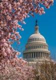 USA Capitol budynek podczas wiosny zdjęcie royalty free
