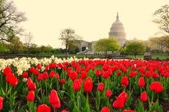 USA Capitol w wschodzie słońca, washington dc, usa Obrazy Royalty Free