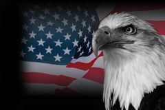 USA flag with american eagle. Eagle Royalty Free Stock Photography